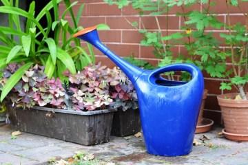 jardinería salud mental