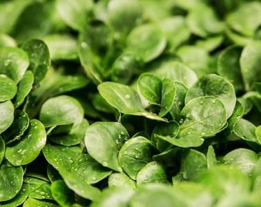 deterioro cognitivo vegetales dieta