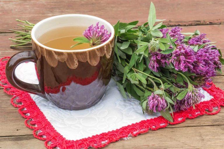 infusión trébol rojo menopausia
