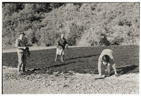 Spreading Seaweed, Manao, Chiloé,1988.