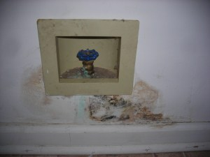 Leaking Refrigerator Ice-Maker Line and resulting Mold Growth