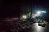 Dark_Forest_OL-4300