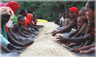 Yirgacheffe, Ethiopia Raised African Beds