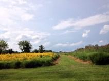 A pretty field