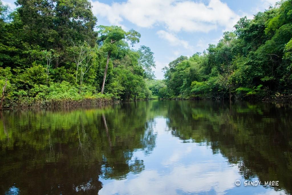 Floresta Amazônica: um lugar para visitar ao menos uma vez