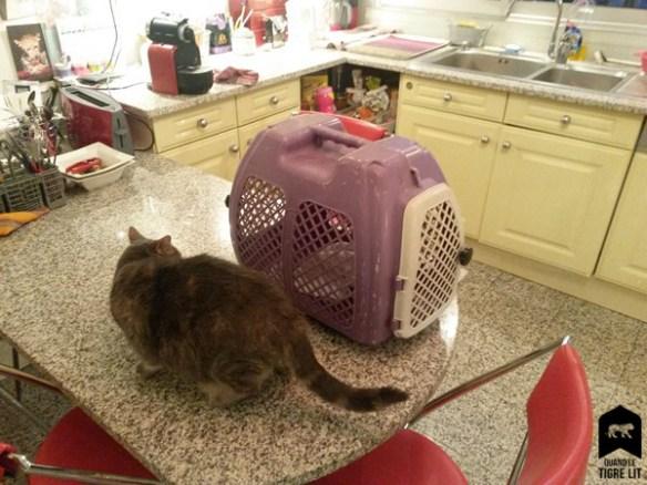Rita et la cage, qui se regardent en chiens de faïence