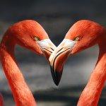 flamingo-600205_1920
