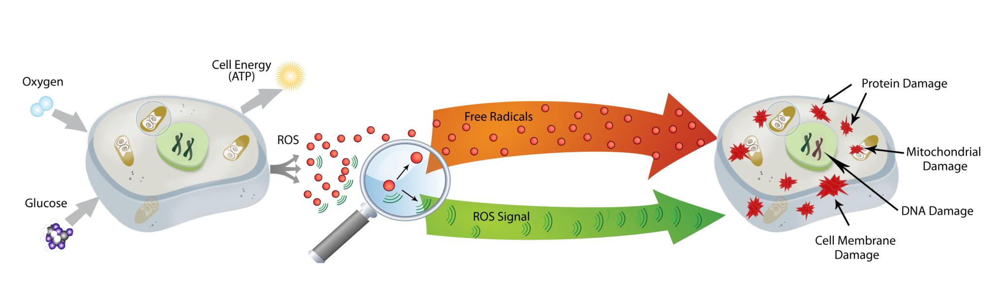 NanoVi and free radicals
