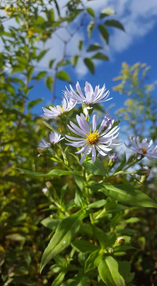 09112016-flower-1