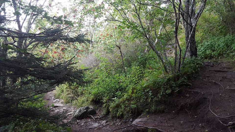 09112016-trail
