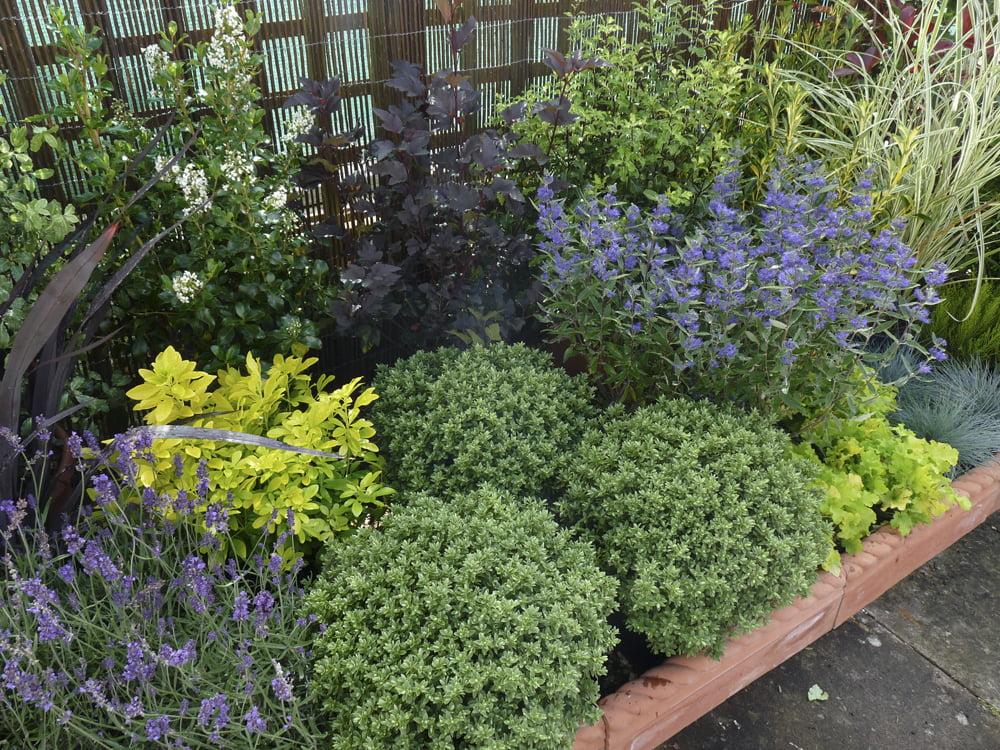 Shrub Garden Design