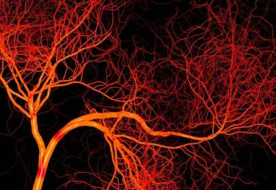 Blood_Vessels