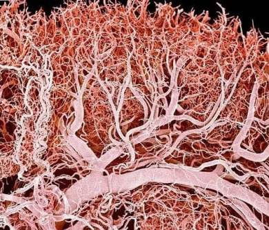 Lymph_capillaries