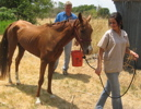 deadhorse3