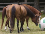 horsetoy