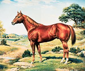 orren-mixers-horse
