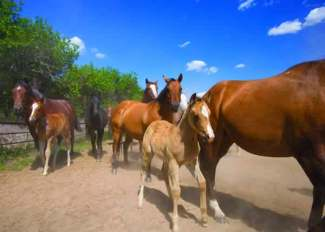Foals with Mares