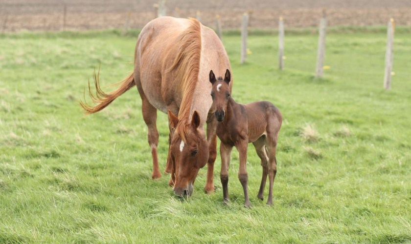 mare and foal standing in field