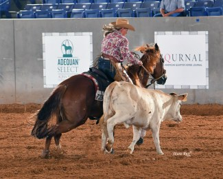 cow horse rider
