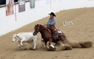 Horse chasing a cow