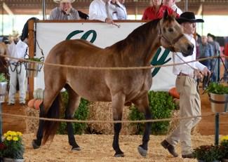 sale reining horse