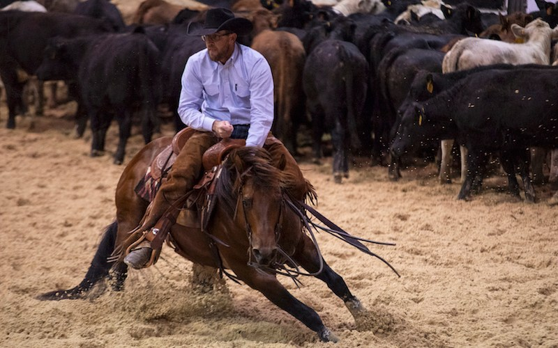 PG Heavily Armed showing at the cutting futurity