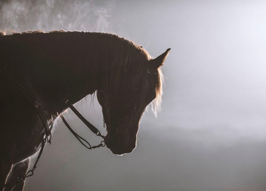 horse walking