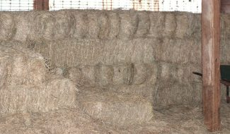 stacked hay square bales in a barn
