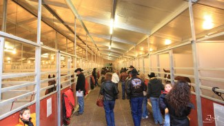 SDP Buffalo Ranch barn