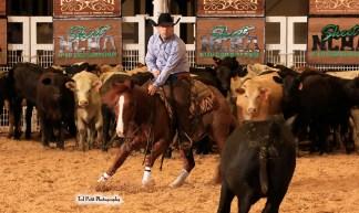 horse-rider-cow