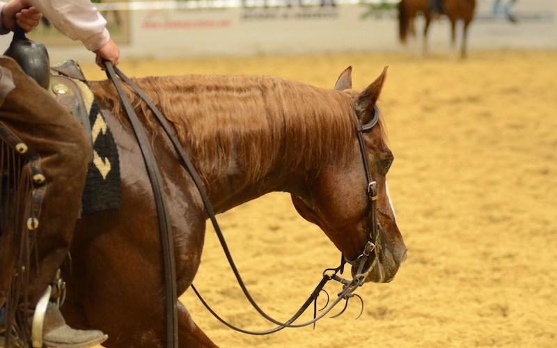 show horse walking through an arena