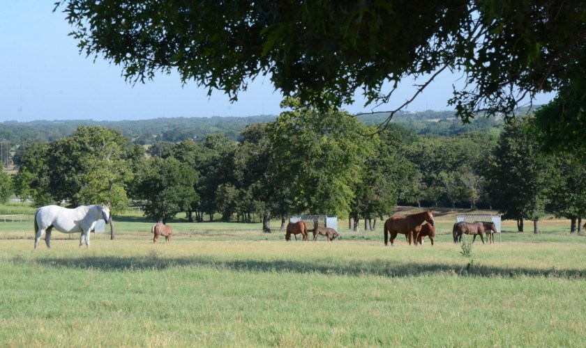 mares and foals standing in a field for a AQHA registration