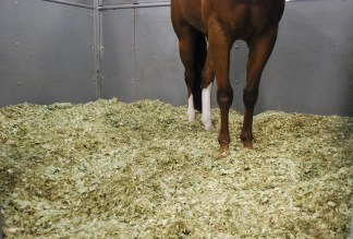 horse standing on green shavings stall bedding