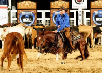 the animal wins NCHA Summer Cutting Spectacular