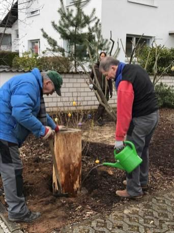 BT-Waldacker-Projekttag-19-03-2021-Natur-zurück-in-die-Stadt--Die-fest-Erde-wird-gewässert-damit-der-Baumstumpf-leichter-eingesetzt-wird