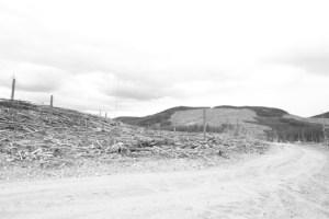 quastuco-silviculture-tree-planting-penticton-photo-contest-entry-5