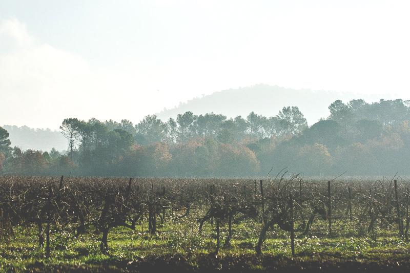 Vue sur la campagne varoise - Magali ANCENAY Photographe Culinaire