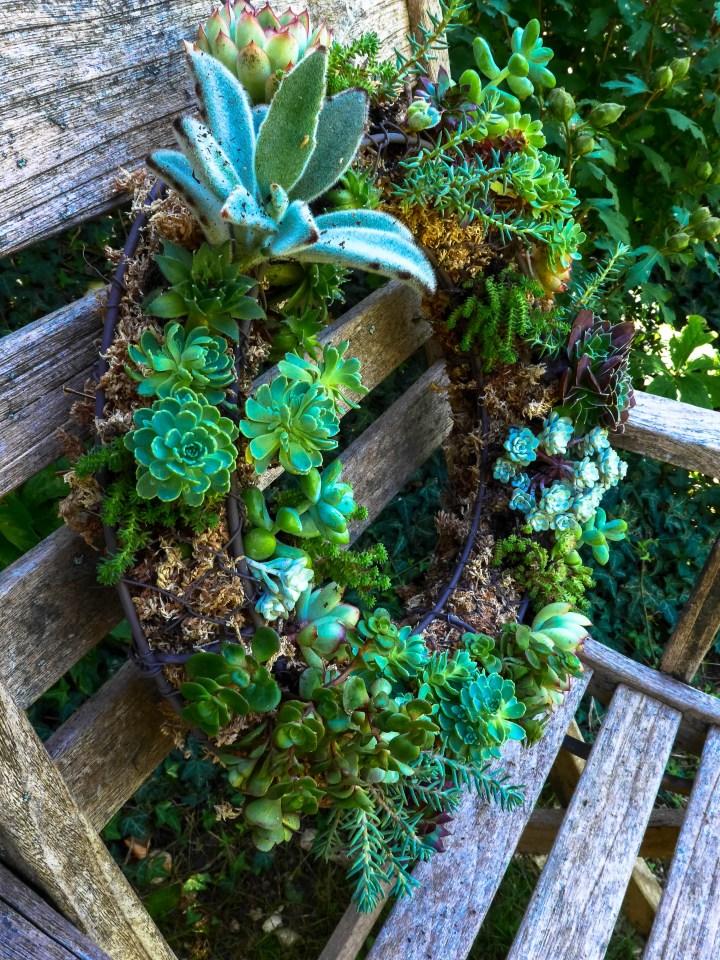 couronne succulentes (6)