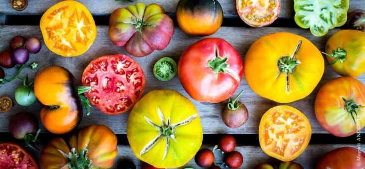 Variétés de tomates anciennes 2016
