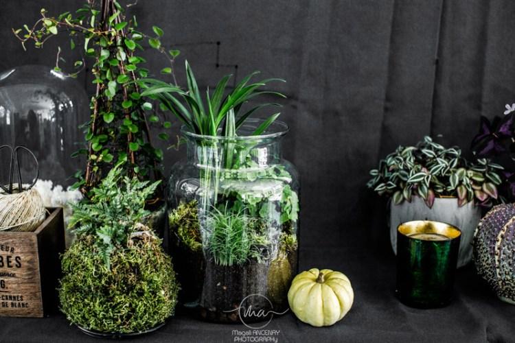 Terrarium pour plantes-Quatre saisons au jardin