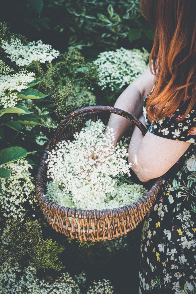 Sirop de fleurs de sureau - Magali ANCENAY