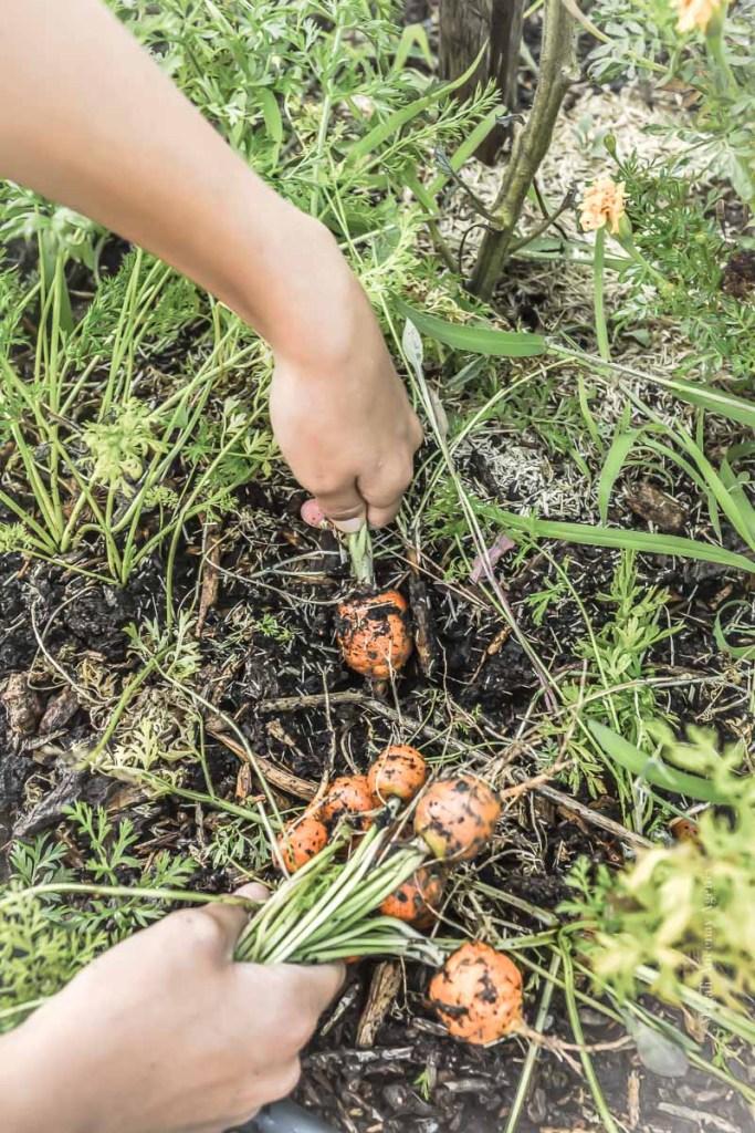 déchets du jardin potager