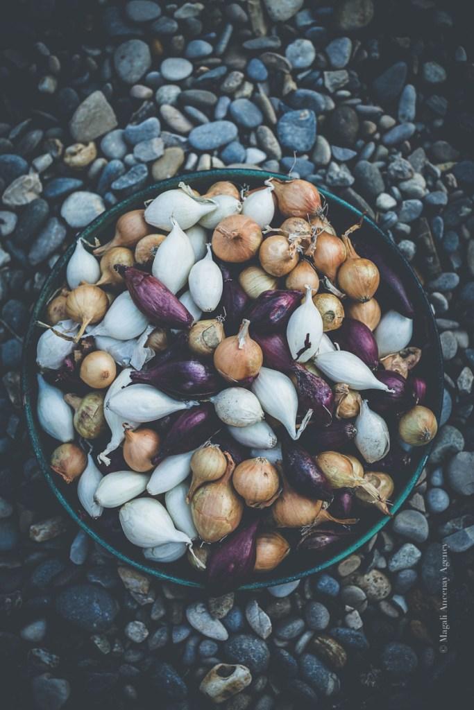 Plantation de l'oignon au potager - Magali Ancenay
