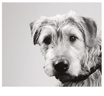 Bürohund Janosch