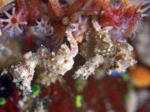 Así es el top 10 de las nuevas especies vivientes