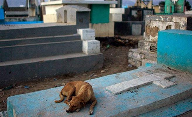 Un perro muere tras estar nueve años pegado a la tumba de su dueño