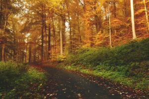 Bosques sostenibles, biomasa energía