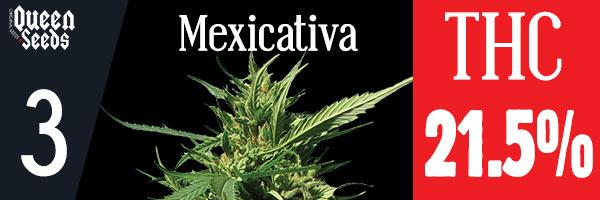 cannabis mexicativa depression