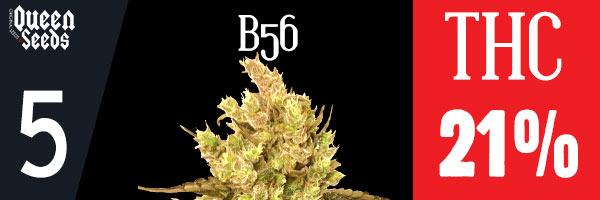 cannabis b56 depression