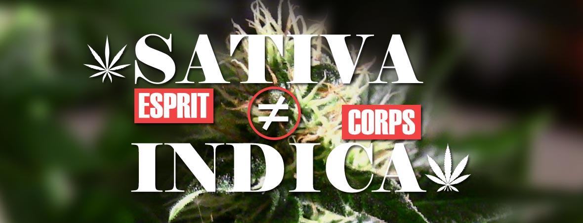Différence cannabis sativa et indica